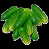 Landgurke