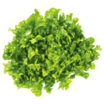 Salat Endivie