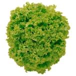 Salat Lollo Bionda