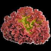 REWE Regional Salat Lollo Rosso