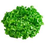 Salat Novita