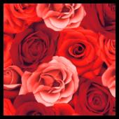 Duni Servietten Romance 20 Stück