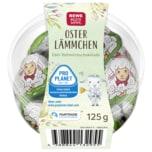 REWE Beste Wahl Oster Lämmchen 125g
