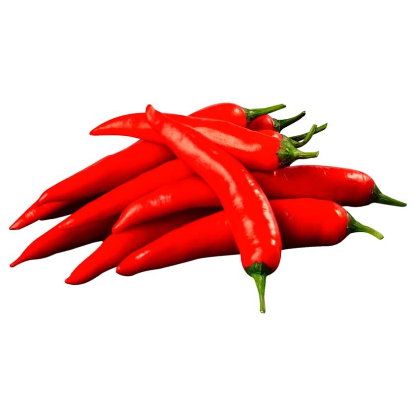 Chili rot
