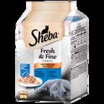 Sheba Katzenfutter Fresh & Fine in Sauce Fisch-Variation 6x50g