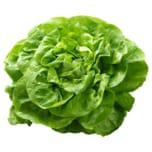 Frings Kopfsalat