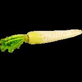Rettich weiss Piccolo