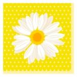 Duni Serviertten Daisy gelb 20 Stück