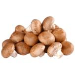 Pilz Champignon braun