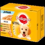 Pedigree Hundefutter Junior in Gelee 12x100g