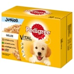 Pedigree Junior in Gelee 12x100g