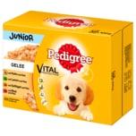 Pedigree Junior in Gelee 12x100g
