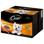 Cesar Favoriten in Sauce 24x100g