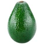 Rosenbaum Avocado XXL