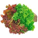 Salattrio