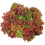 Bio Salat Bunt