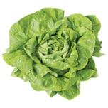 REWE Bio Kopfsalat