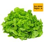 Grüner Eichblattsalat von Gärtnerei Böck