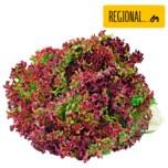 Salat Lollo Rosso 1 Stück
