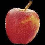 Apfel Gala rot